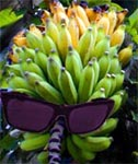 sunburn bananas with sunglasses