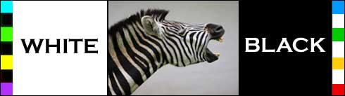 Are black and white colors? Zebra?