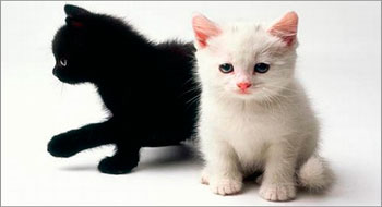 Black and white cats
