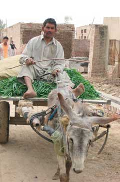 Donkey cart and fresh produce