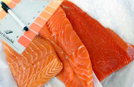 Wild salmon and farm raised salmon with colorants