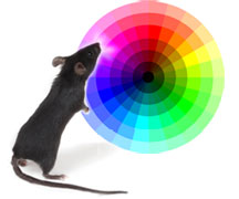 mouse and color wheel
