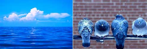 Blue sky birdsg blue sky ocean birds publicscrutiny Choice Image